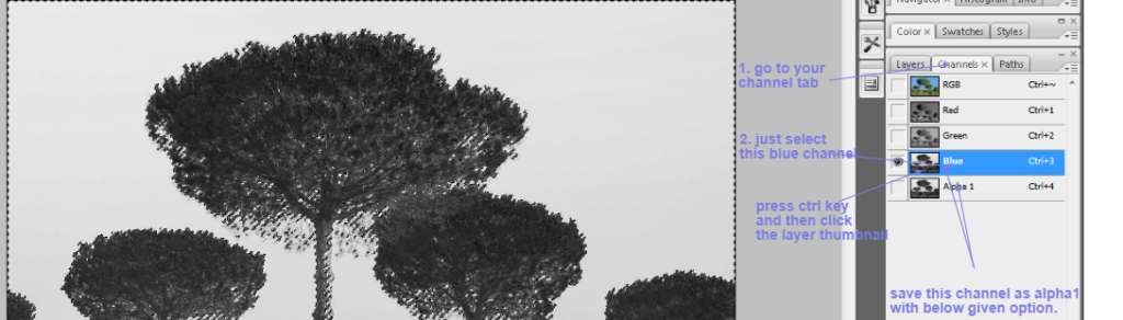 clean tree background in photoshop2