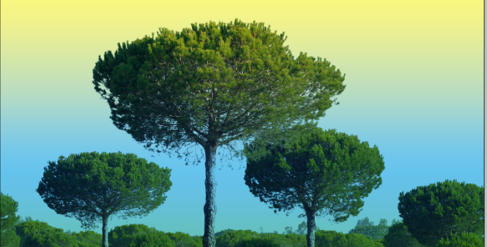 clean tree background in photoshop9