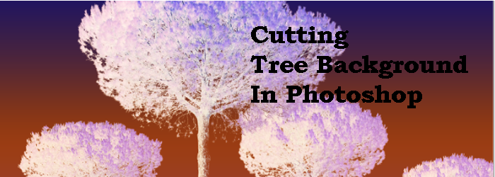 cutting tree background in photoshop feature